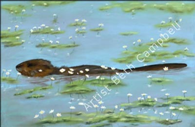 Painting of a Beaver in a Saskatchewan Pond by artist Beth Campbell