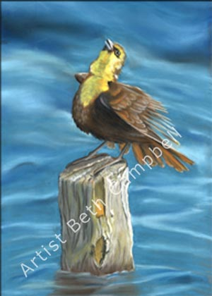 Painting of a female Yellow-Headed Blackbird by artist Beth Campbell