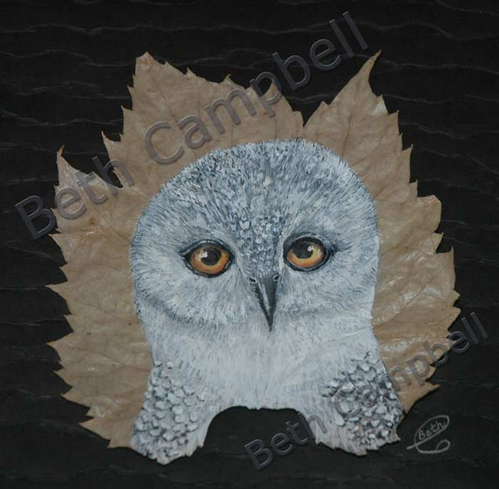 Snowy Owl painted on a grape vine leaf by Artist Beth Campbell